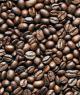 Coffee Bean Sybil Agri
